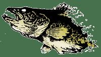 Walleye-Logo-Photo-Floating