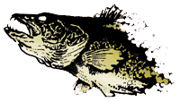 Walleye-Logo-Photo-Floating